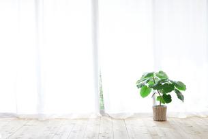 窓とカーテンと観葉植物の写真素材 [FYI02718535]