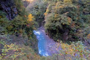 黒部峡谷の写真素材 [FYI02719771]