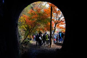 12月 紅葉の愛岐トンネル群 近代化産業遺産の写真素材 [FYI02721604]