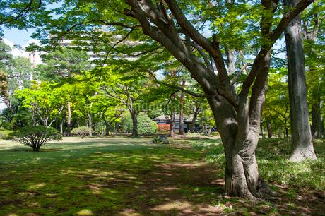 殿ヶ谷戸庭園の春の風景の写真素材 [FYI02721798]