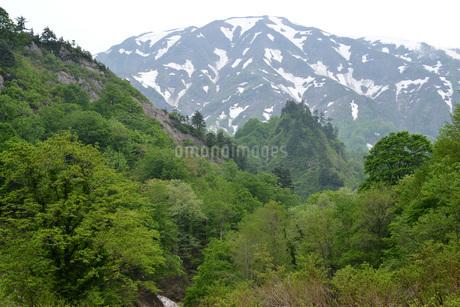 只見町 浅草岳 新緑の写真素材 [FYI02722267]