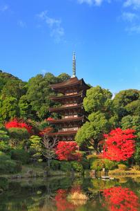 瑠璃光寺の紅葉の写真素材 [FYI02722714]