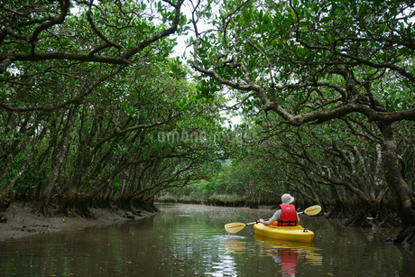 奄美大島 マングローブ原生林とカヌーの写真素材 [FYI02723292]