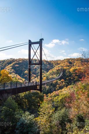 ほしだ園地紅葉と吊橋の写真素材 [FYI02723307]