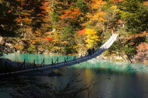 11月 夢の吊橋 紅葉の寸又峡の写真素材 [FYI02723506]