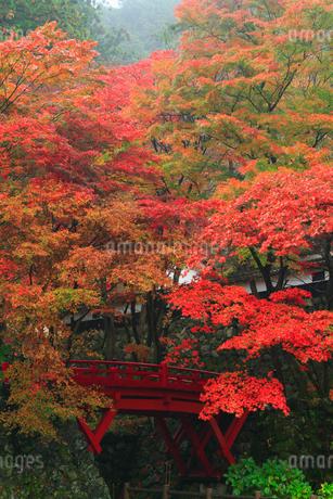 両界山横蔵寺の紅葉の写真素材 [FYI02723541]