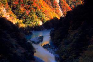 11月 夢の吊橋 紅葉の寸又峡の写真素材 [FYI02723574]