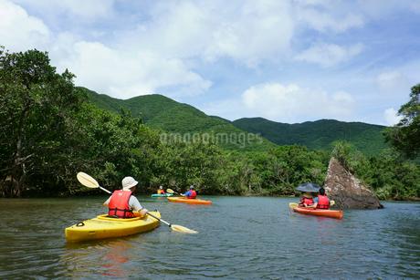 奄美大島 マングローブ原生林とカヌーの写真素材 [FYI02723610]