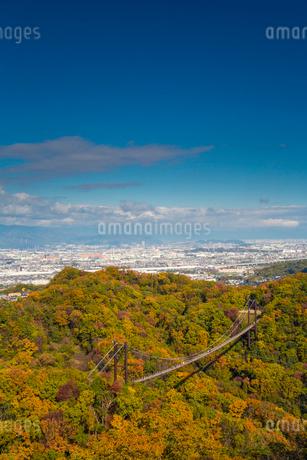 ほしだ園地紅葉と吊橋の写真素材 [FYI02723687]