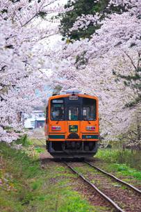 津軽鉄道と芦野公園の桜の写真素材 [FYI02724239]