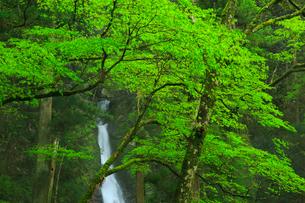 龍王の滝の写真素材 [FYI02724774]