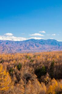カラマツ林と秩父山地の写真素材 [FYI02725026]
