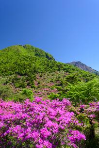 初夏の仁田峠の写真素材 [FYI02725068]