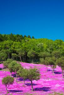 芝ざくら滝上公園の写真素材 [FYI02725321]