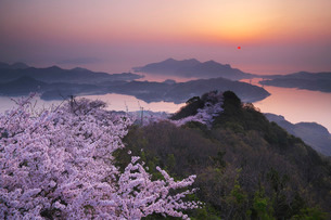 積善山の桜と日の出の写真素材 [FYI02725377]