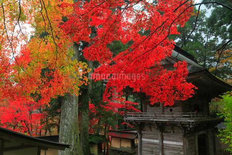 両界山横蔵寺の紅葉の写真素材 [FYI02725505]