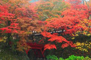 両界山横蔵寺の紅葉の写真素材 [FYI02725518]