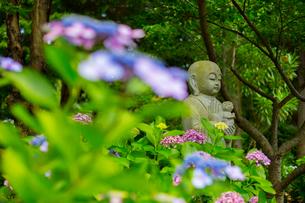 北浦の紫陽花寺の写真素材 [FYI02725593]