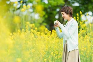 菜の花畑で写真を撮る若い女性の写真素材 [FYI02726139]