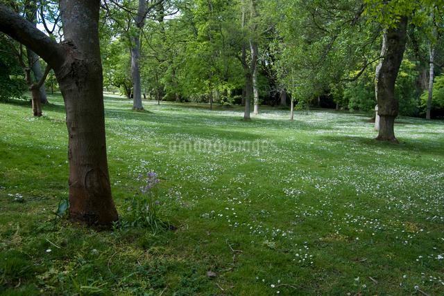 デイジーの花が咲く森の写真素材 [FYI02733800]