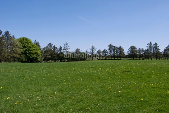 タンポポが咲く草原の写真素材 [FYI02733853]