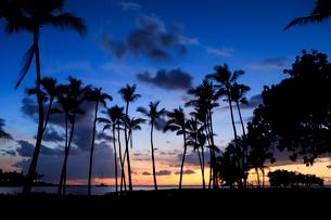 ハワイ島のマウナラニリゾートの夕暮れの写真素材 [FYI02738152]