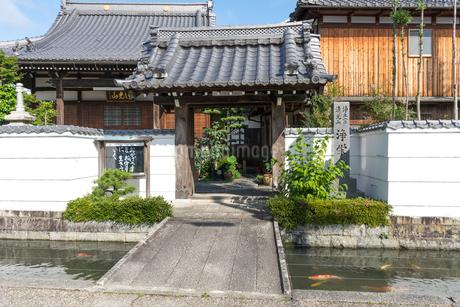 五個荘金堂の町並み,浄栄寺と水路に泳ぐ鯉の写真素材 [FYI02738175]