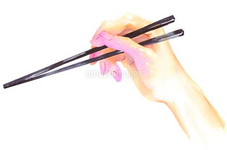 箸を持つ手のアップのイラスト素材 [FYI02738183]