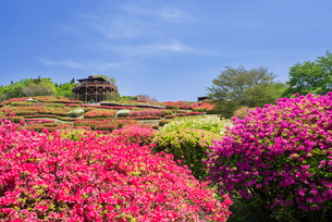 ツツジ咲く椎八重公園の写真素材 [FYI02738187]