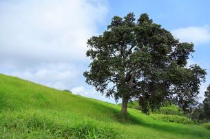 ハワイ島のハワイ火山国立公園 カフクユニット のトレイルの写真素材 [FYI02738218]