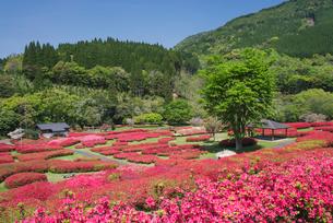 ツツジ咲く椎八重公園の写真素材 [FYI02738233]