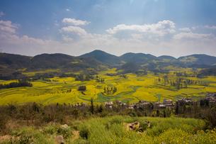 菜の花満開の羅平(中国雲南省)の写真素材 [FYI02738242]