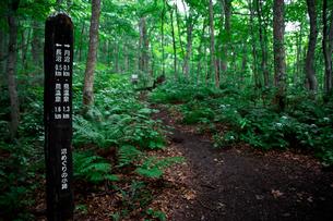 蔦温泉沼めぐり遊歩道と標識の写真素材 [FYI02738248]