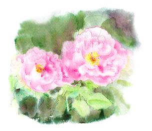 水彩で描かれたピンクの花のイラスト素材 [FYI02738296]