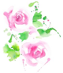 水彩で描かれたピンクのバラの花のイラスト素材 [FYI02738320]