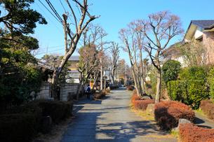 大宮盆栽村かえで通りの写真素材 [FYI02738433]