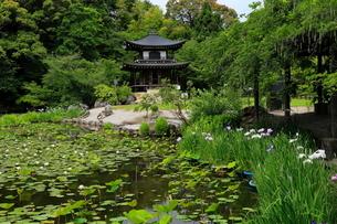 6月 初夏の勧修(かじゅう)寺の写真素材 [FYI02738650]