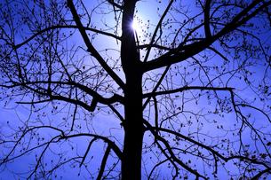 木のシルエットの写真素材 [FYI02738653]