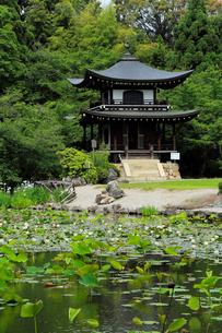 6月 初夏の勧修(かじゅう)寺の写真素材 [FYI02738820]