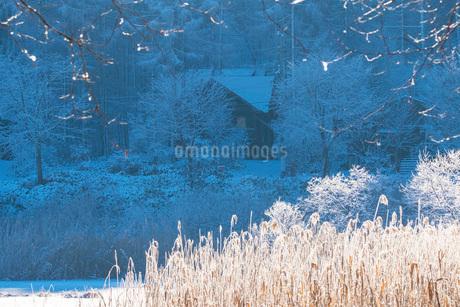 朝の聖高原の中牧湖の雪景色の写真素材 [FYI02738897]