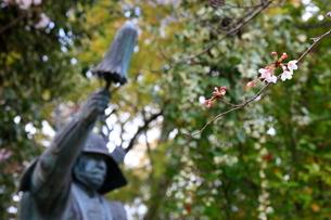 三光神社 桜と真田幸村公の像の写真素材 [FYI02738901]