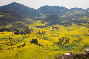 菜の花満開の羅平(中国雲南省)の写真素材 [FYI02738958]