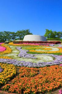 みちのくの杜の湖畔公園 彩のひろばの写真素材 [FYI02739072]