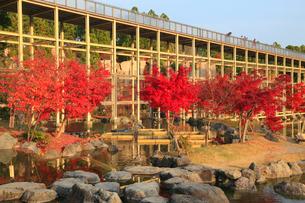 けいはんな記念公園の紅葉の写真素材 [FYI02739143]