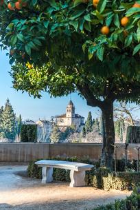 オレンジの樹木越しにサンタマリア教会を望むの写真素材 [FYI02739174]