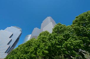新緑とワールド ファイナンシャルセンターの写真素材 [FYI02739176]