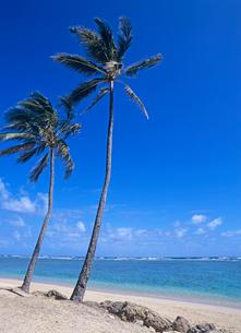 裏オアフのビーチ ハワイの写真素材 [FYI02739368]