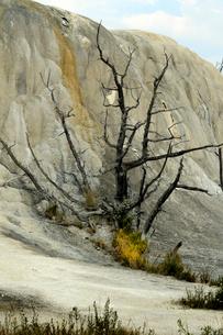 イエローストーン国立公園のマンモスカントリーのアッパーテラスのオレンジスプリングマウンドの写真素材 [FYI02739379]