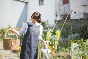 畑の中でかごとじょうろを持っている女性の写真素材 [FYI02739457]