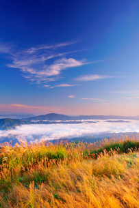 塩塚高原のススキと朝の雲海と雲辺寺山などの山並みの写真素材 [FYI02739474]